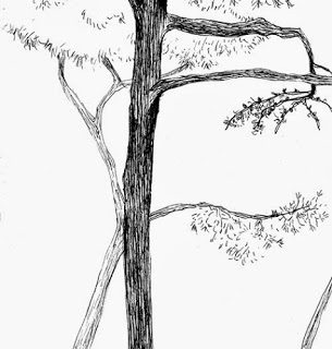 Dibujando. Parque Castillo Palomar